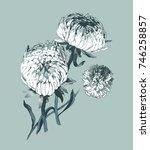 aster flower seamless pattern.... | Shutterstock . vector #746258857