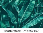 tropical banana leaf texture ... | Shutterstock . vector #746259157