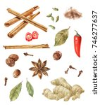 hand drawn watercolor spices  ... | Shutterstock . vector #746277637