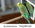 a wavy parrot is sitting in... | Shutterstock . vector #746289169