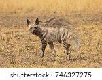 striped hyena at blackbuck... | Shutterstock . vector #746327275