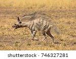 striped hyena at blackbuck... | Shutterstock . vector #746327281