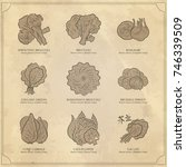 genus brassica vegetables set.... | Shutterstock .eps vector #746339509