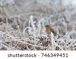 Cute Fluffy European Robin...