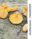chanterelle mushrooms close up... | Shutterstock . vector #746360209