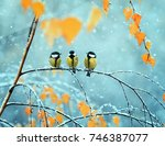 portrait of three cute birds... | Shutterstock . vector #746387077