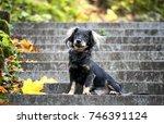 Cute Black Mixed Breed Dog ...