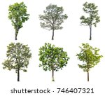 isolated collection of tree on... | Shutterstock . vector #746407321