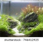 Small photo of Planted Freshwater Aquarium with Caridina shrimp