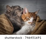 the cat affectionately licks... | Shutterstock . vector #746451691