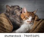 the cat affectionately licks... | Shutterstock . vector #746451691