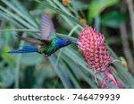 swallow tailed hummingbird...   Shutterstock . vector #746479939