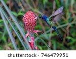 swallow tailed hummingbird... | Shutterstock . vector #746479951