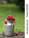 Small photo of Red currant berries in the vintage canvas in the garden.