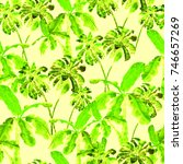 palm pattern. watercolor banana ... | Shutterstock . vector #746657269