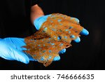 detail of hand holding a slab... | Shutterstock . vector #746666635
