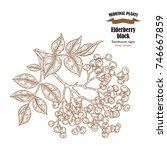 elderberry black common names... | Shutterstock .eps vector #746667859