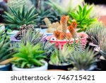 many type of cactus plant in... | Shutterstock . vector #746715421