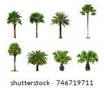 Collection Palm Tree Isolated White - Fine Art prints