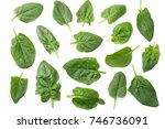 Spinach Leaves Isolate On Whit...
