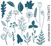 herbs and wild flowers. hand... | Shutterstock .eps vector #746736571