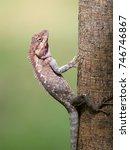 close up of sunbathing lizard.  ... | Shutterstock . vector #746746867