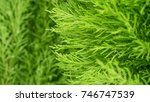 green plant and nature tree... | Shutterstock . vector #746747539