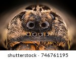 Small photo of Extreme magnification - Wolf Spider eyes (Lycosidae) at 4x magnification
