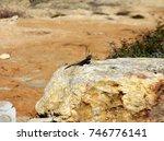lizard on stone | Shutterstock . vector #746776141