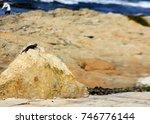 lizard on stone | Shutterstock . vector #746776144