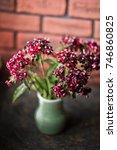 Beautiful Small Burgundy Aster...