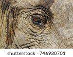 african bush elephant eyes are... | Shutterstock . vector #746930701