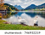 two white swans on the... | Shutterstock . vector #746932219