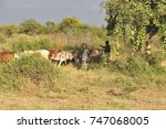 Small photo of Rift Valley, Kenya, Africa - September 15, 2013: Samburu youngsters tend to the cattle.