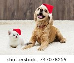 kitten and puppy in the new... | Shutterstock . vector #747078259