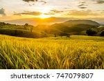 Landscape Of Green Rice Fields...
