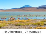 james and chilean flamingos in... | Shutterstock . vector #747088384