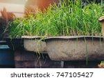 backyard garden grow plants...