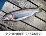 Rainbow Trout 50 Cm