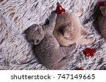 Stock photo british kittens are hugging hugs of british kittens sleeping british cute kittens british 747149665