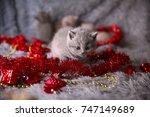 Stock photo british kitten in the new year s toys british kitten is a new year s gift the sweetest new year s 747149689