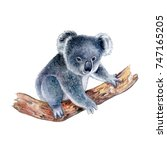 koala isolated on white...   Shutterstock . vector #747165205