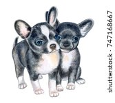 Stock photo cute chihuahua puppies isolated on white background black puppy on a white background watercolor 747168667