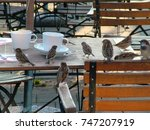 Small photo of house sparrows on coffee table (close-up shot)