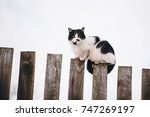 Stock photo cat walking on the fence in the village 747269197