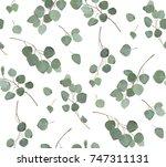 eucalyptus silver dollar tree... | Shutterstock .eps vector #747311131