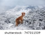 A Dog In The Winter In The...