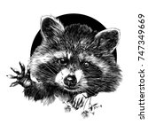 raccoon sketch vector graphics... | Shutterstock .eps vector #747349669