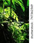 green leaf closeup sunshine in... | Shutterstock . vector #747362569
