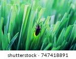 firefly on grass at dusk | Shutterstock . vector #747418891